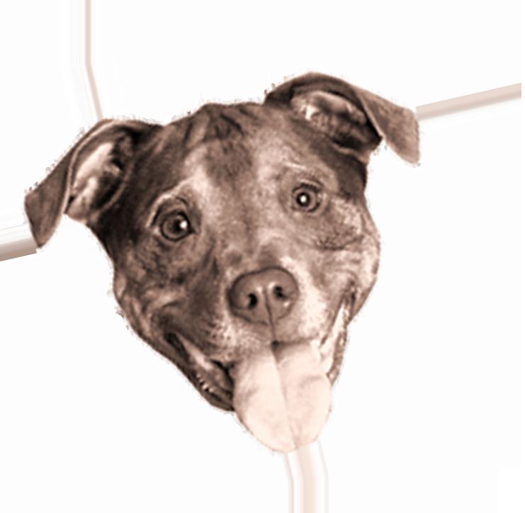 titos-dog